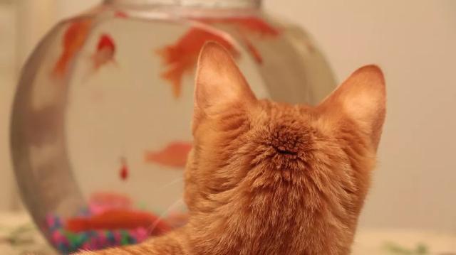 一个猫主人的自白
